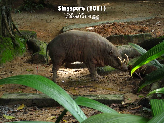 Day 3 Singapore - Zoo Singapore 10