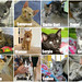 December adoptions by Goathouse Refuge