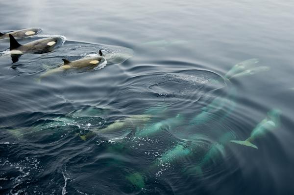 RYALE_Antarctica_Whales-10
