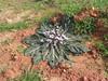 Kreta 2005-1 093