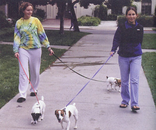 Cynthia Parker '03 and Andrea McKay '03 walking Dean of Students Ann Quinley's three dogs, Sophie, Cheever and Mollie, in November 1999 for the spring 2000 Pomona College Magazine issue.
