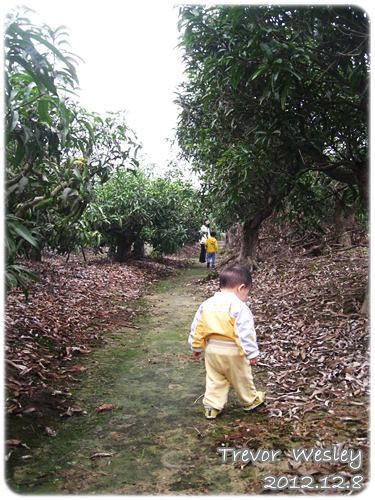 121208-在芒果園裡散步