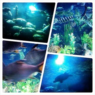 SeaWorld 2