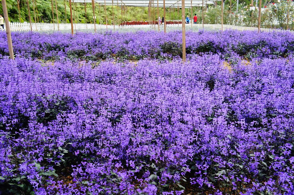 Genting Lavender Farm