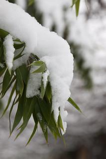 01/2013 - Snow 2/2