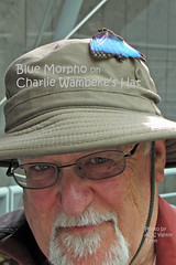 Blue Morpho Butterfly on Charlie Wambeke's hat 130125-122610 C4VTcT