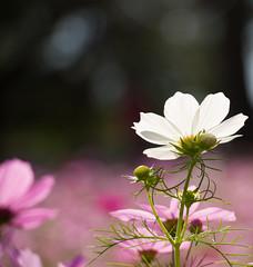 NOLA City Park Flowers-14