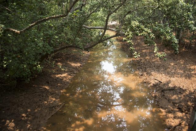 'Orange' water in Berlayar Creek mangroves