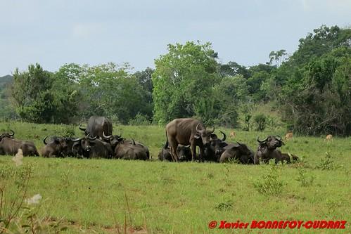 ken kenya kwale marere shimbahillsnationalreserve buffle animals kwalecounty kenyale