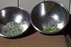 Solar Herb Drying