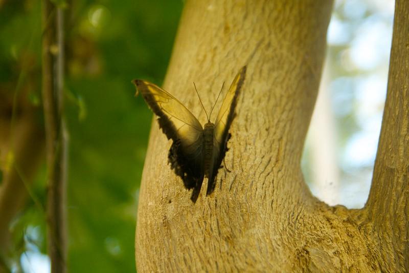 butterfly  2249