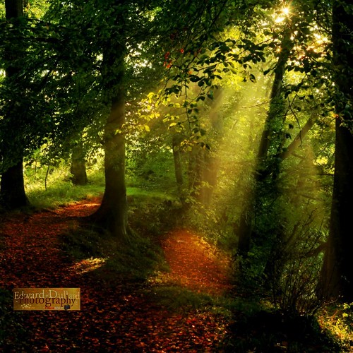 wood autumn ireland light fall leaves forest landscape licht herbst irland eire magical enchanted sunbeams irlanda ierland leinster autommne bestcapturesaoi edwarddullardphotographykilkennycityireland flickrstruereflectionlevel1 me2youphotographylevel1