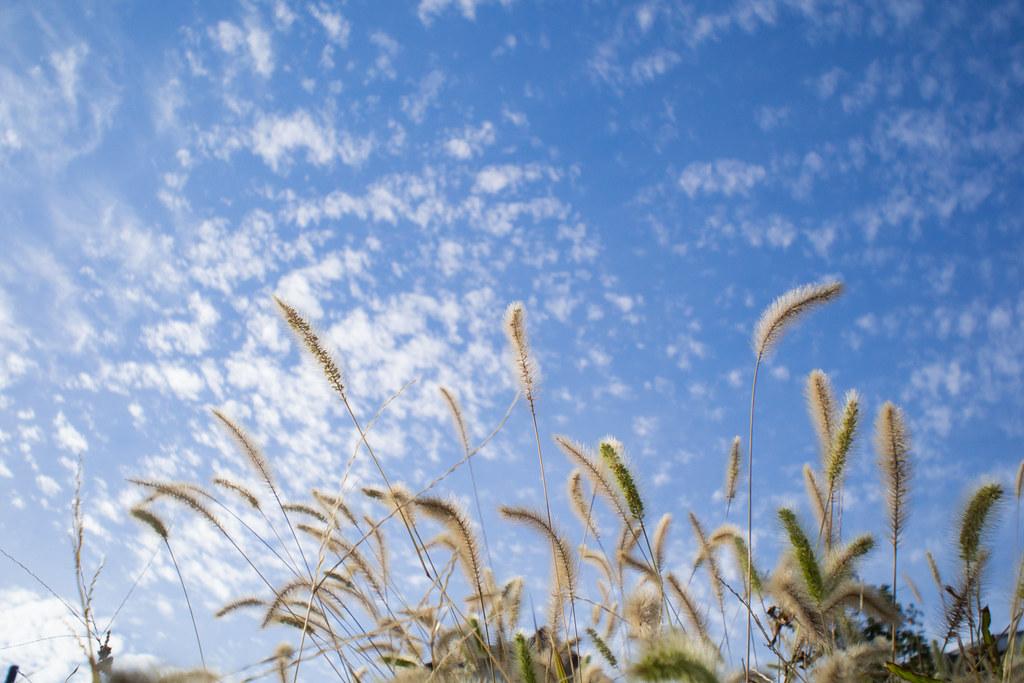 秋の空 2012/10/13 OMD30398