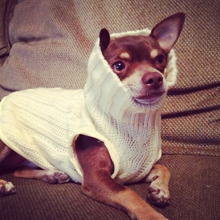 fred in his new sweater