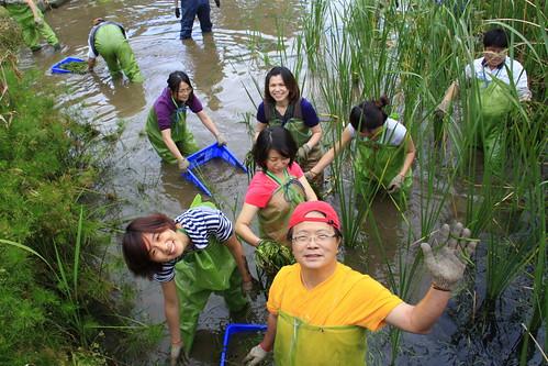 生態工作假期於陽明山二子坪清除外來種,水中工作很快樂唷!