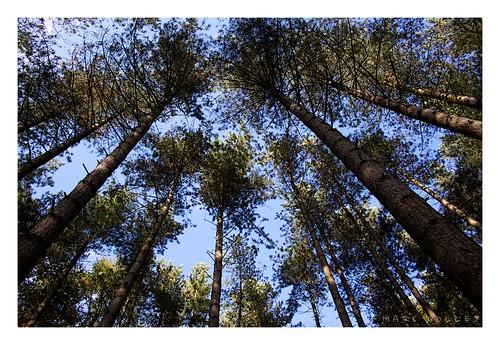 Herfst in het Zoniënwoud
