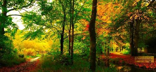 wood autumn kilkenny ireland light painterly fall nature leaves landscape licht camino path herbst paysage magical photoart enchanted leinster autunna autommne edwarddullardphotographykilkennycityireland