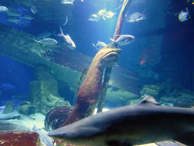 Long Island Aquarium Riverhead Black Hairstyle And Haircuts