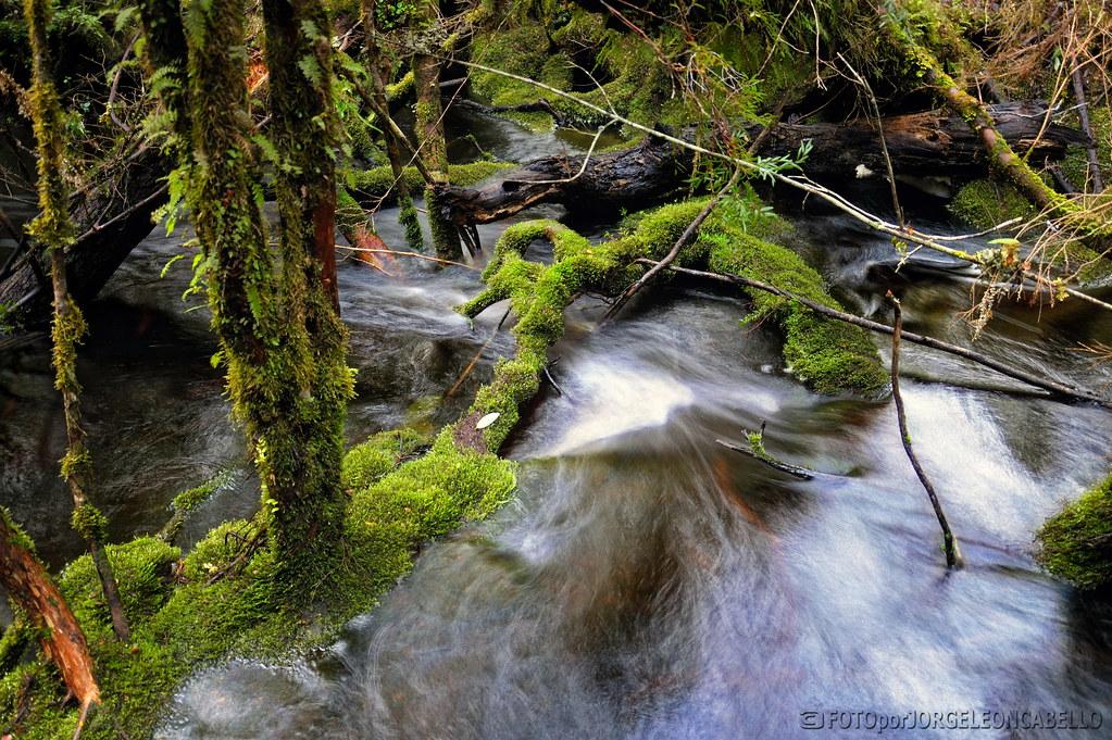 Rios De Agua Viva Parque Tantauco Chiloe El Sendero De Flickr