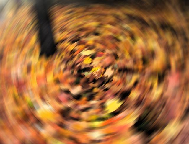 Herbst / Autumn - #1