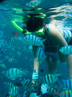 Fish feeding at Simizu Island, El Nido