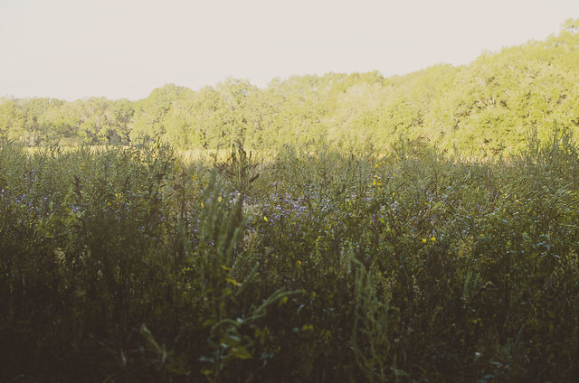 09-prairie