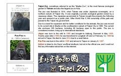Gorilla Family - Taipei