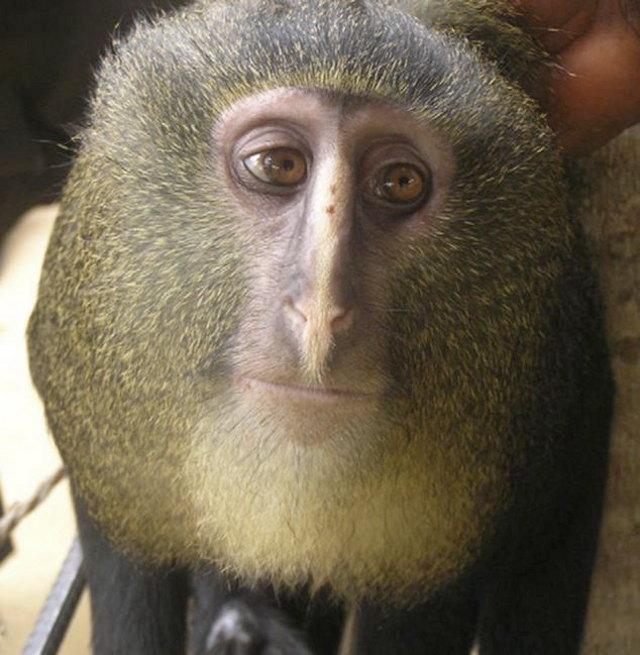 new-monkey-1