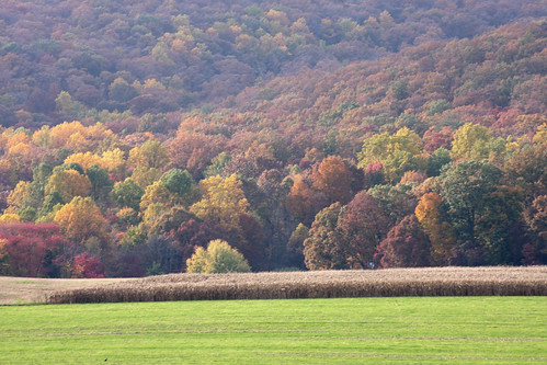 autumn leaves maryland fallfoliage frederickcounty fallfoliageautumnwesternmarylandmdcanon40d