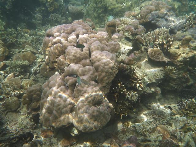 好多奇形怪狀, 我想都沒想過會長這種形狀的珊瑚!