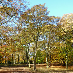 Autumn in Lister Park