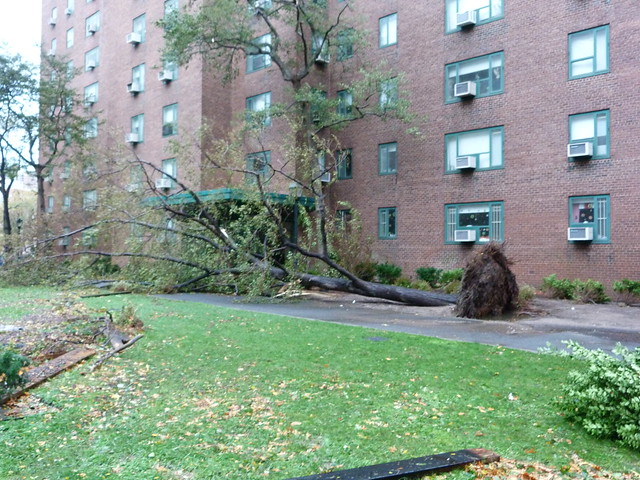 Tree uprooted by hurricane in peter cooper village for Cooper village