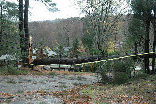 tree down across Monmouth Ave. in West Milford, N.J. Tuesday as a result of damage from Hurricane Sandy. by Jai Agnish