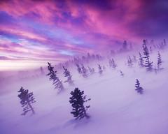 [フリー画像素材] 自然風景, 森林, 朝焼け・夕焼け, 雪, 紫色・パープル, 風景 - アメリカ合衆国 ID:201211061600
