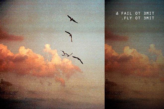 Fail+Fly