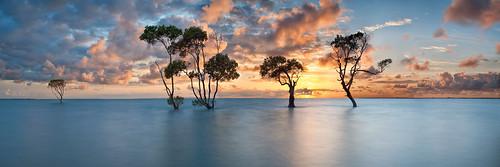 ocean longexposure trees panorama seascape tree water clouds sunrise bay pano australia panoramic mangrove qld queensland deceptionbay beachmere