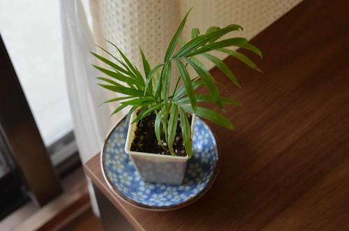 Tiny Plant Decor
