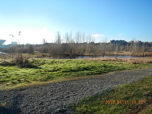 Shoveler's Pond