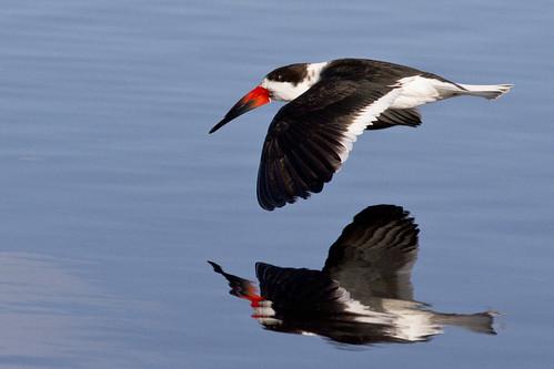 bird florida 110 aquaticbird xplr thousandplus kh0831