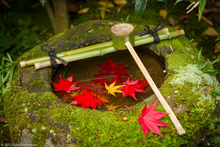 Maple leafs and wash basin, Koto-in Temple, Kyoto