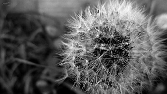 Pide un deseo / Make a wish.