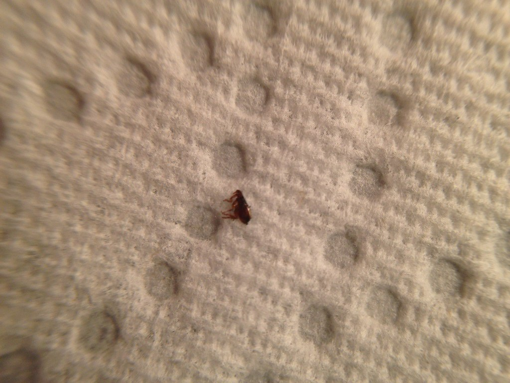 Bed Bug Bites On Chest