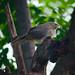 Bharathpur-0409