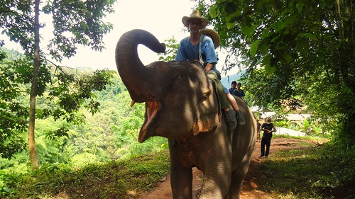 Elephant camp Chiang Mai
