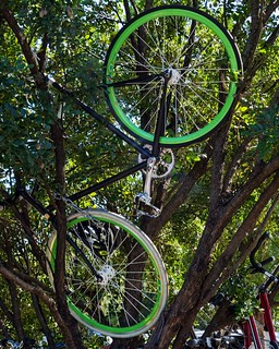 ACL 2012 Bike Tree
