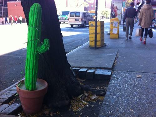 A Cactus Grows on Avenue A