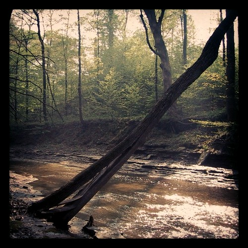 oldwoods by Nature Morte