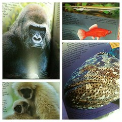 #homeschool preparation Animals beginning with Gg on the blog tomorrow
