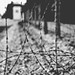 Small photo of Dachau Germany, Former Nazi Death Camp