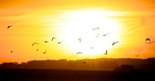morning autumn sun field birds pretenders talkofthetown